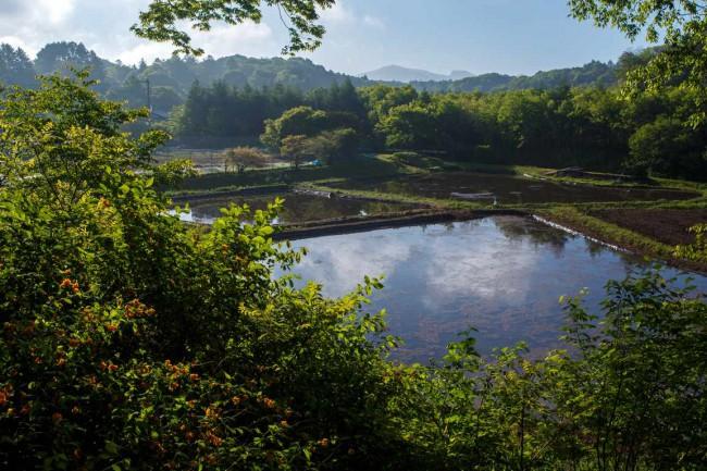 諏訪神社からの景色