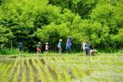 信州里山トラスト「軽井沢」田植え~稲刈り体験2019