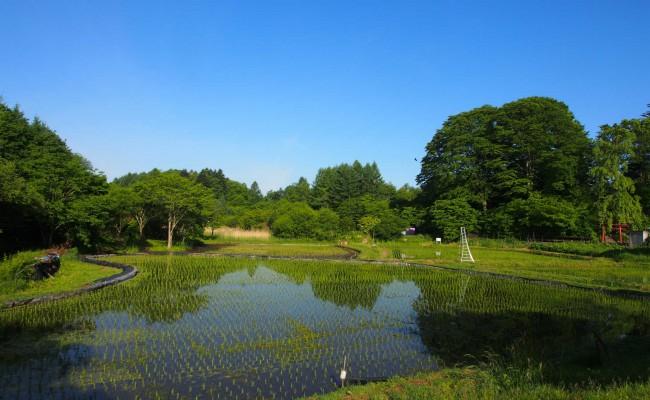 » 仲間募集‼塩沢村で一緒に暮らしませんか?