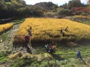 軽井沢「塩沢村 蛍めぐり米」イネカリンピック2016開催スケジュール