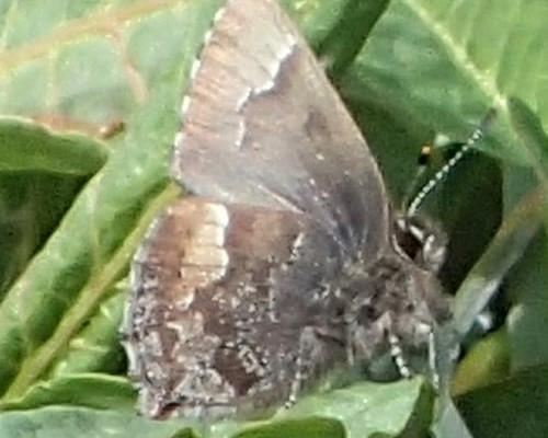 » 軽井沢昆虫クラブ活動第1回 2018年4月22日(日) 春の昆虫採集(主に蝶)