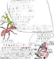 2020年第7回軽井沢昆虫クラブ定例会 9月27日(日)
